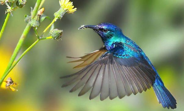 beija-flor cores