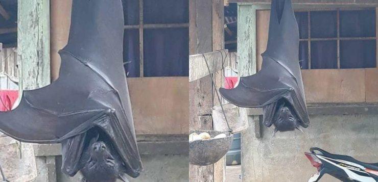 morcegos humanos filipinas