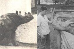 Rinoceronte Cacareco