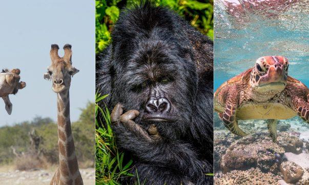 comedy wildlife