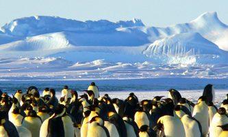 Covid-19-Antártida