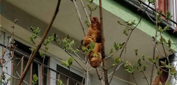 'Animal assustador' em árvore era apenas um croissant