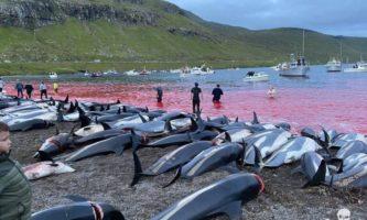 caça de golfinhos