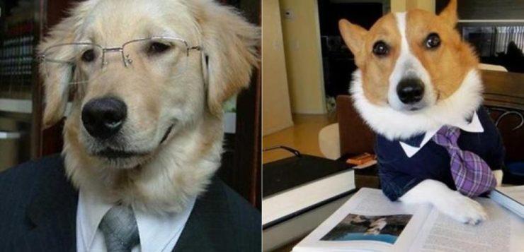 Cãezinhos maltratados estão processando os antigos donos (é sério e é no Brasil!)