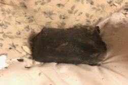 meteorito no canadá