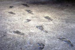 pegadas creta áfrica