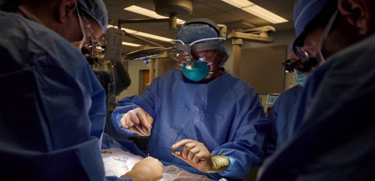 Caso pioneiro! Rim de porco é transplantado com sucesso em paciente humano