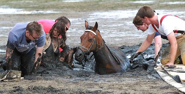 cavalo-atolado-areia-movedica