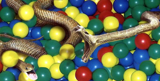 cobra-piscina-bolinhas-mcdonalds