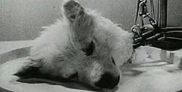 experimento-cabeca-cachorro