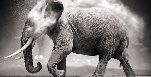 experimento-lsd-elefante