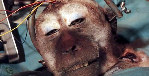 experimento-transplante-cabeca-macaco
