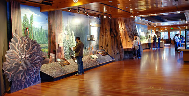 giant-forest-museum