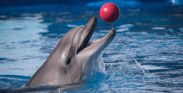 golfinho-brincando
