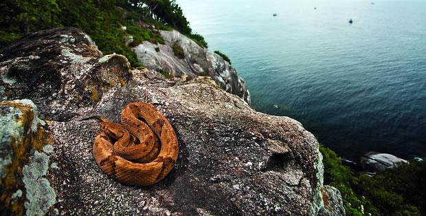 ilha-das-cobras