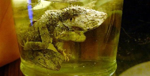 licor-de-três-lagartos