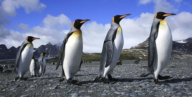 pinguim-patagonia