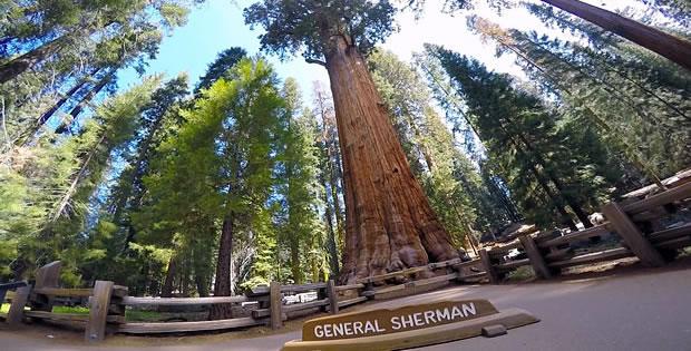sequoia-general-sherman