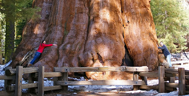 sequoia-national-park-turistas