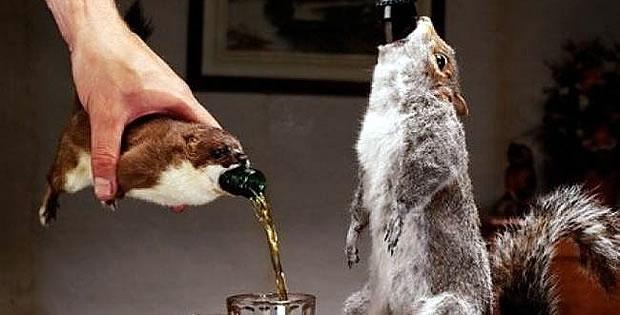 squirrel-beer